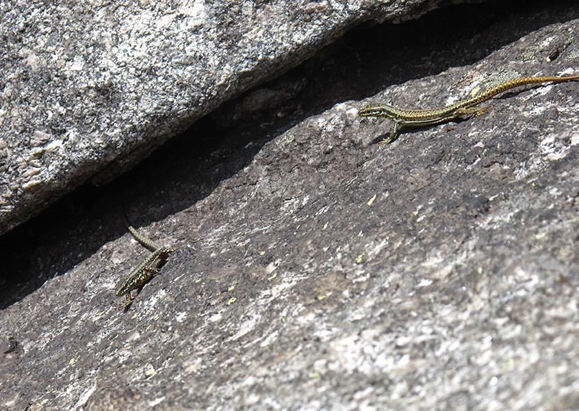 Bergführer klettern
